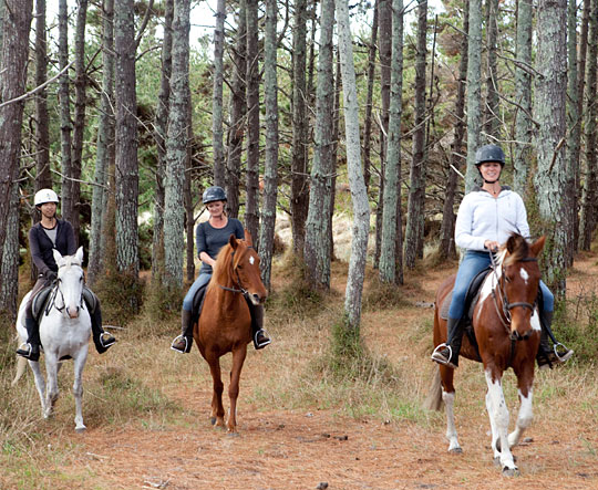 http://www.pakiriholidaypark.co.nz/wp-content/uploads/2016/12/Activity-Horses-1-540x443.png